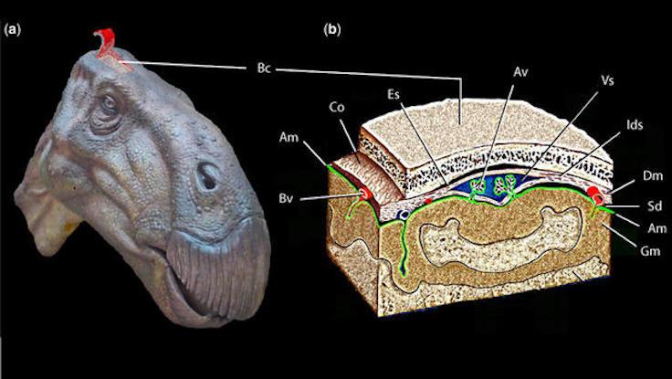 dinozor-beyni