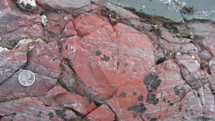 fosildom