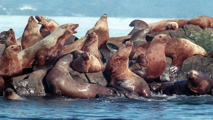 Exxon Valdez sızıntısı, 1989